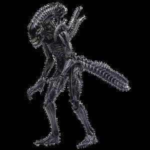 [Alien Vs. Predator: 1/18 Scale Action Figure: Xeno Warrior (PX Exclusive) (Product Image)]