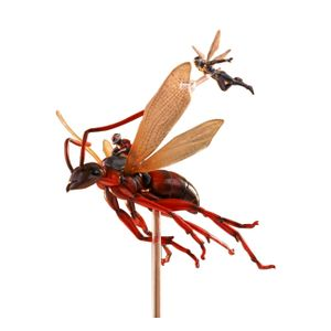 [Antman & The Wasp: Ant-Man On Flying Ant & The Wasp (Product Image)]